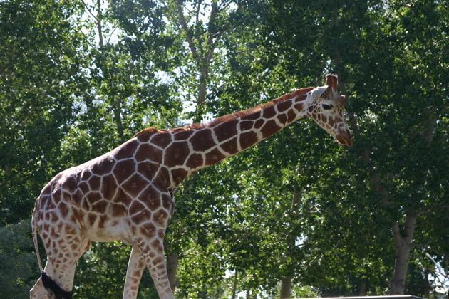 Tropical Savanna Animals