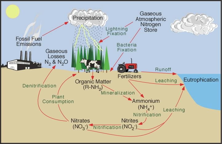 Schematic of the Nitrogen Cycle